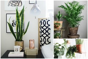 11 Houseplants That Don't Need A Lot of Sunlight To Grow
