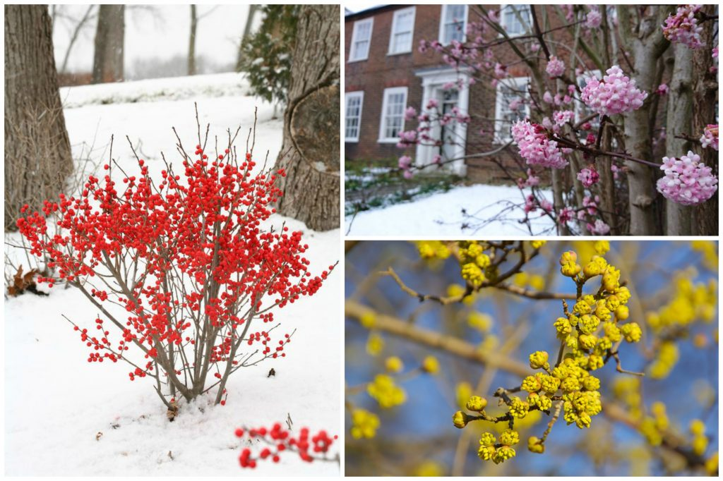 11 Winter Plants That Will Survive the Cold Weather